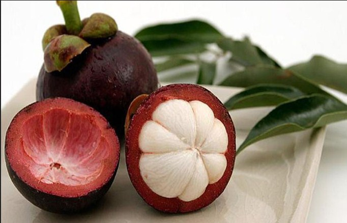 Mangosteen And excretory organ Functions